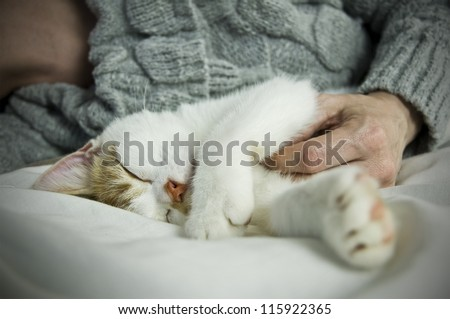 pet owner on bed with sleeping cat close up - stock photo