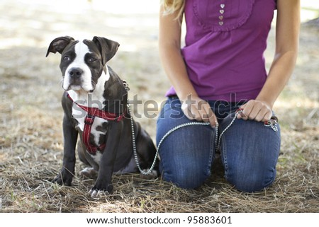 Pet owner with Pit Bull puppy - stock photo