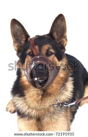 pet police - stock photo