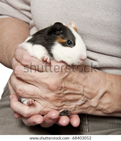 how to hold a guinea pig