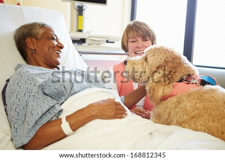 Pet Therapy Dog Visiting Senior Female Patient In Hospital - stock photo