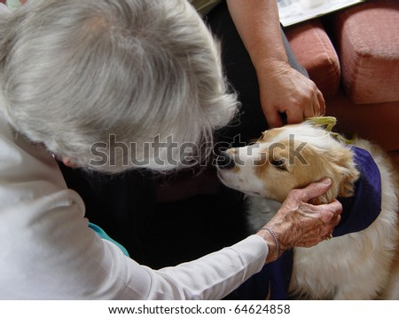 Pet therapy series. Beautiful cream and white dog in a rest home being petted by an elderly resident - stock photo