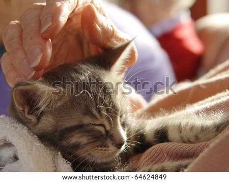 Pet therapy series. Beautiful tabby kitten in a rest home being petted by an elderly resident - stock photo
