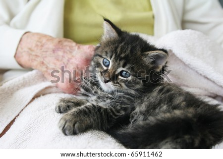 Pet therapy series. Beautiful tabby kitten sitting on the lap of an elderly rest home resident - stock photo