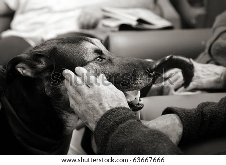 Pet therapy series. Beautiful therapy dog in a rest-home looking up at an elderly resident, hand coming out to touch her. Black and white image - stock photo