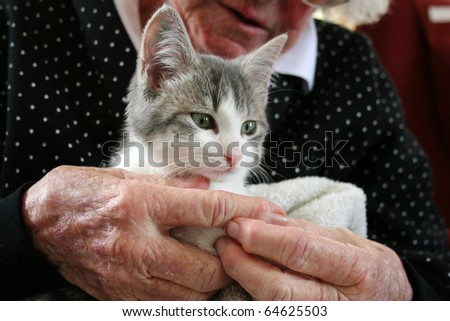 Pet therapy series. Cute grey and white kitten being cuddled by an elderly rest home resident - stock photo