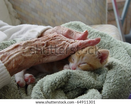 Pet therapy series. Tiny ginger kitten sleeping on the lap of an elderly rest home resident - stock photo