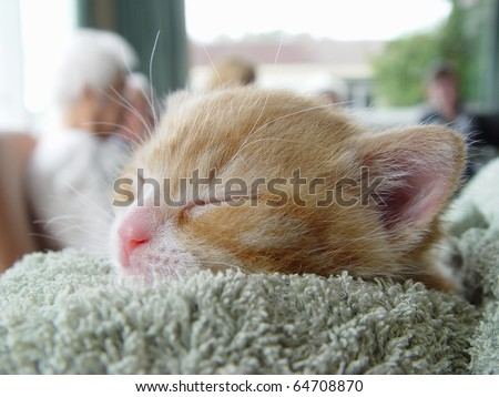 Pet therapy series. Tiny ginger kitten visitor at a rest home