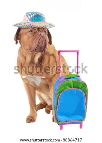 Pet travel concept, studio shot - stock photo