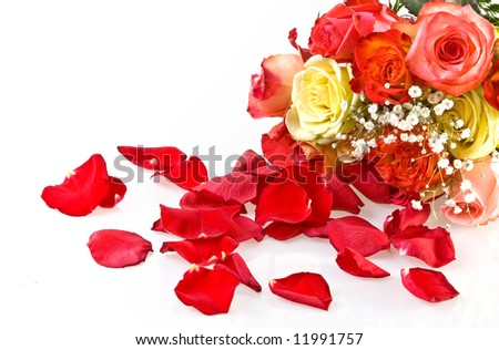 Petals and multicolored roses - stock photo