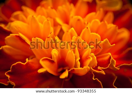 Petals detail - stock photo