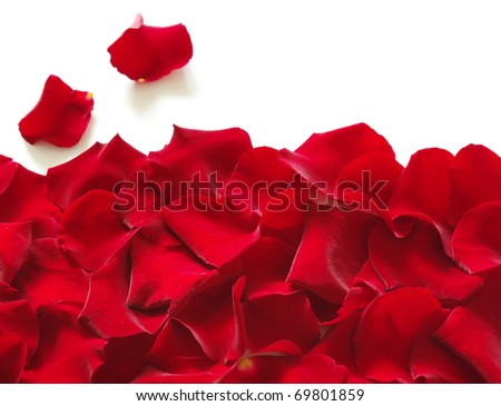 Petals of a rose - stock photo