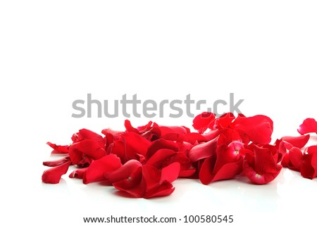 Petals of a rose and blank paper on a with copyspace white background. - stock photo