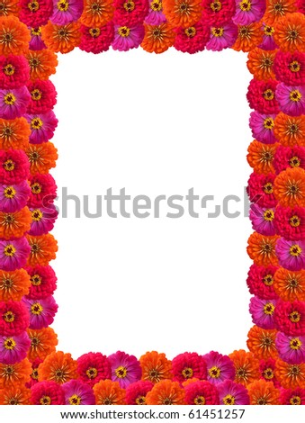 Petals of flowers isolated on white background - stock photo