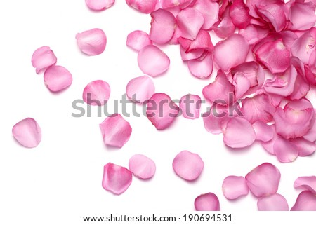 Petals of pink rose - stock photo