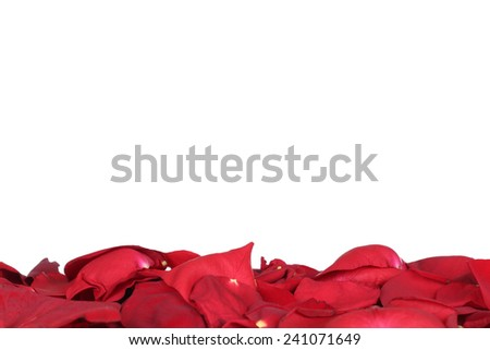 Petals of red roses flowers on Valentine's and mothers day with copyspace - stock photo