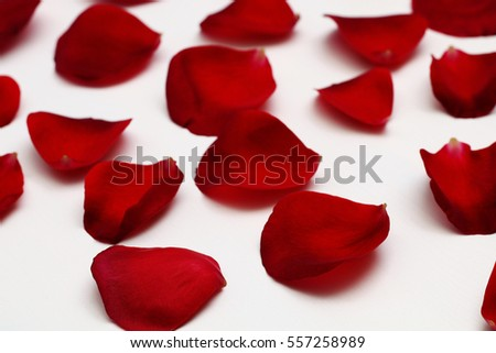 Petals of red roses on a white background