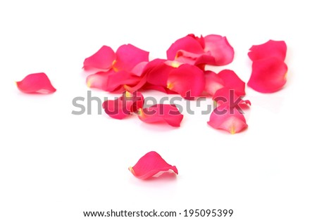 Petals of roses on a white background  - stock photo