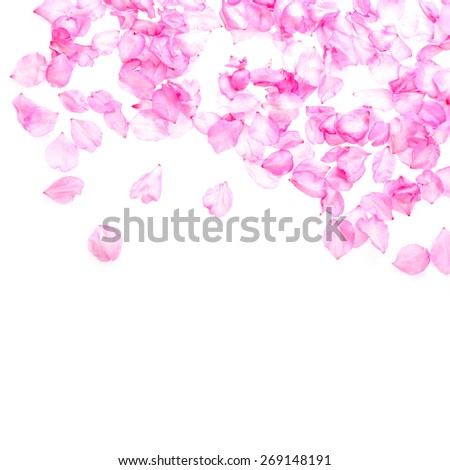 petals pink almond lined both side  isolated on white background - stock photo