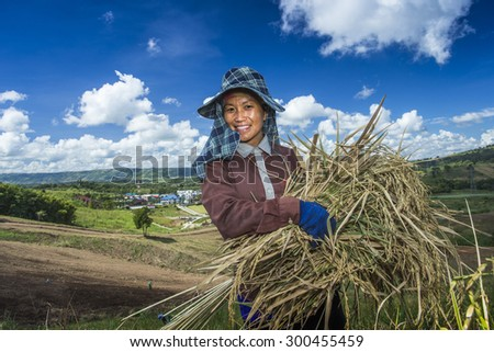 PETCHABOON, THAILAND - OCTOBER 30 : Portrait of happy woman farmer. She is harvesting the ripe rice, the important agriculture in Thailand, 2014 oct, 30. - stock photo