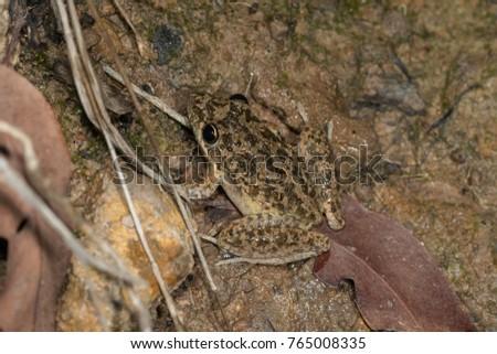 Sloppy frog raven rocket