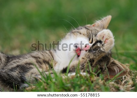 petite little kitten playing on the grass Cat's child - stock photo