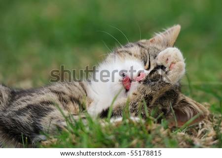 petite little kitten playing on the grass Cat's child - stock photo
