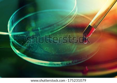 Petri dish. Laboratory concept. - stock photo