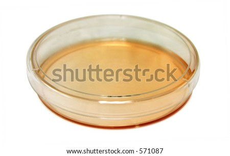 Petri dish (tissue culture plate) shot from above isolated on white. - stock photo