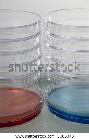 Petri dishes - stock photo