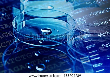 Petri dishes and liquid material. DNA analyzing concept. - stock photo