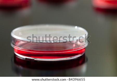 Petri dishes used for eukaryotic cell culture in  solid agar. - stock photo