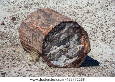 Petrified trunk in Petrified Forest National Park, Arizona, USA - stock photo
