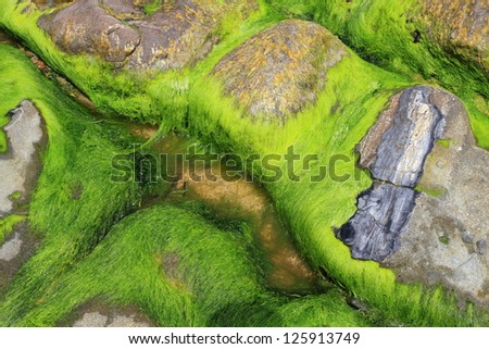 Petrified wood and seaweed on the beach at low tide in Catlins, New Zealand - stock photo