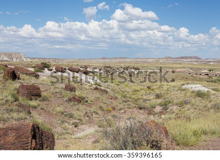 Petrified Wood strewn over the open plains of the Painted Desert National Park in Arizona, USA.  - stock photo
