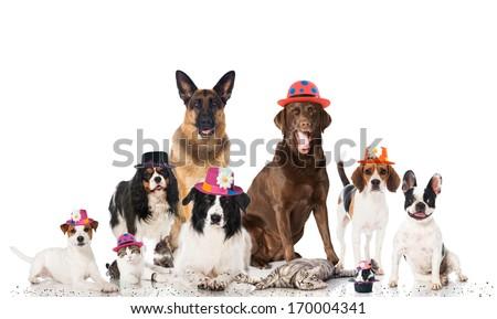 Pets carnival - stock photo
