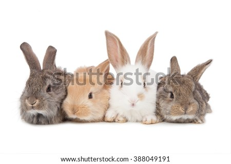 Pets. Four of the rabbit isolated on white background. - stock photo