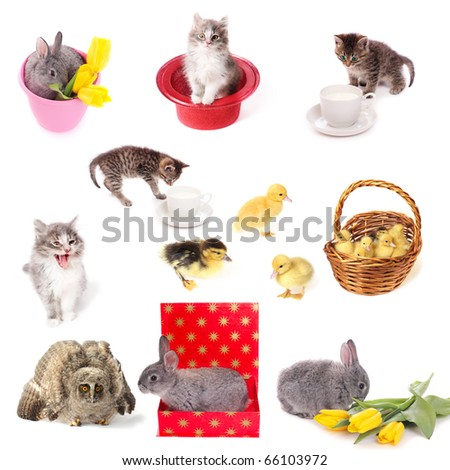 pets isolated on white - stock photo
