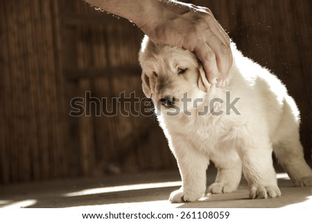 petting the puppy - stock photo