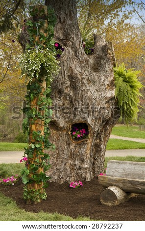 Petunia Beds in a Tree Trunk - stock photo