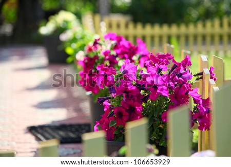 Petunia flowers on a decorative fence in a front yard - stock photo