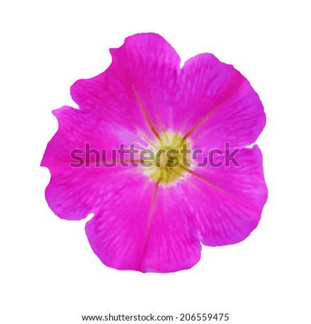 Petunia, Isolated On White Background - stock photo