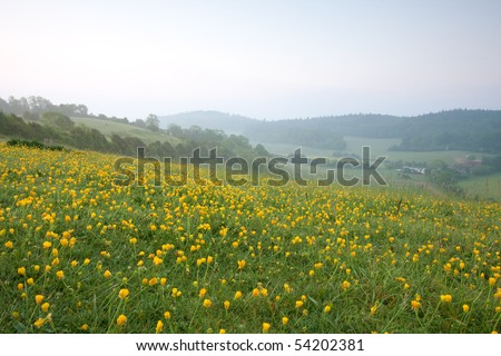 Pewley Down just before dawn in May.  Pewley Down is part of the North Downs in Surrey which is an Area of Outstanding Natural Beauty. A mass of yellow buttercup flowers is in the foreground. - stock photo