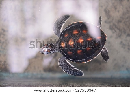 Phang Nga, Thailand-October 18, 2015:Release baby sea turtle to sea by a volunteer,Phang Nga Coastal Fisheries Research And Development Center in Phang Nga, Thailand.