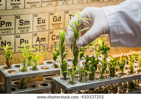 Pharmaceutical laboratory testing of pesticides on plants - stock photo