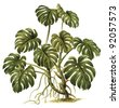 Philodendron pertusum / Vintage illustration from Meyers Konversations-Lexikon 1897 - stock photo