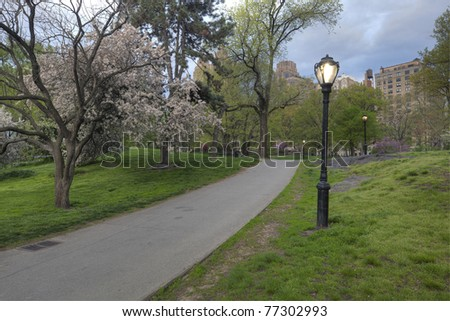 Phlox subulata , cherry tree in Central Park in the early morning - stock photo