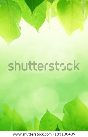 pho or bodhi leave background - stock photo