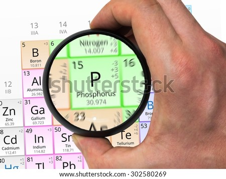 Phosphorus symbol - P. Element of the periodic table zoomed with magnifying glass