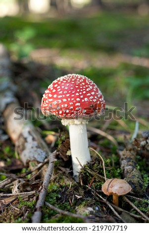 Photo beautiful red mushroom amanita sunny day in the forest